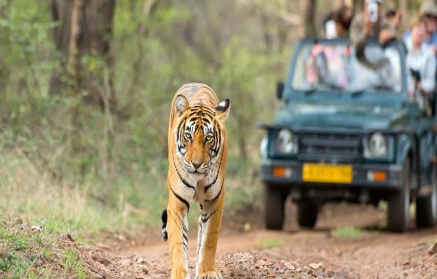 Golden Triangle with Rajasthan Wildlife
